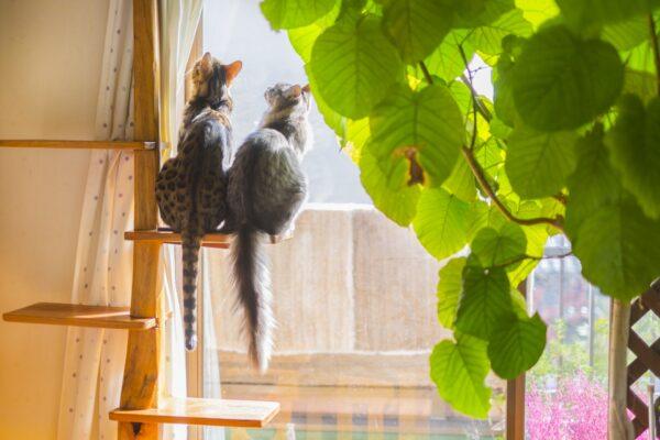 ペットを飼っていたマンションを高く売る方法、売却しやすくする方法を徹底解説!